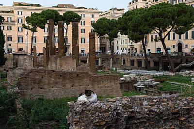 Basketball Patents - Oh So Rome - Cats Umbrella Pines and Ancient Ruins by Georgia Mizuleva