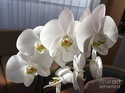 Photograph - Oh Those Orchids by Barbara Plattenburg