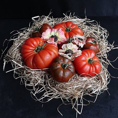 Photograph - Oh Tomatoes by Sarah Phillips