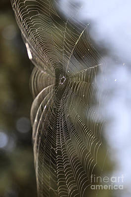 Photograph - Oh What Webs We Weave by Clayton Bruster