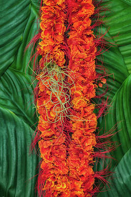 Photograph - Ohai Ali'i With Pele's Hair by Jade Moon
