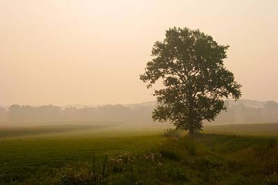 Photograph - Ohio Tree At Dawn by Polly Castor