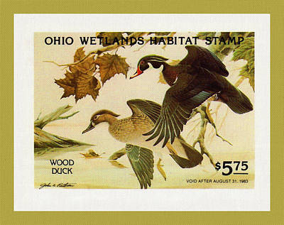 Painting - Ohio Wetlands Habitat Stamp by Lanjee Chee