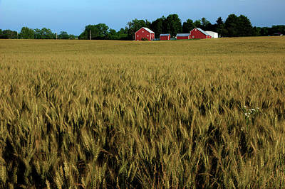 Photograph - Ohio Wheat Field by Mike Eingle