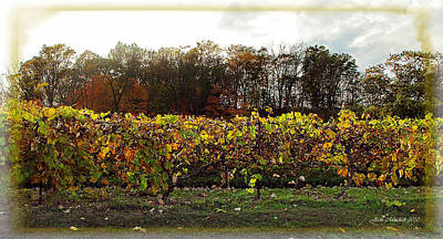 Photograph - Ohio Winery In Autumn by Joan  Minchak