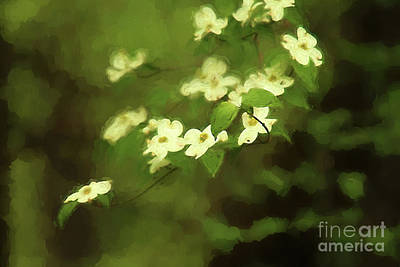 Photograph - Oil Painting Dogwoods by Darren Fisher