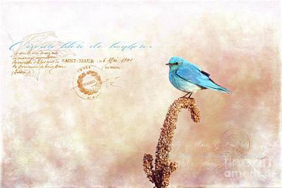 Photograph - Oiseau Bleu De Bonheur by Beve Brown-Clark Photography