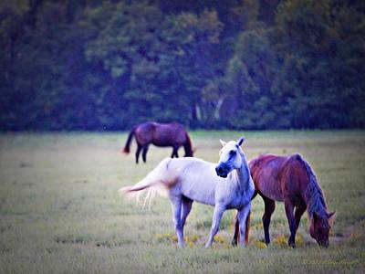 Photograph - Ok Horse Ranch_1b by Walter Herrit