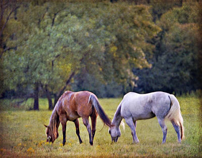 Photograph - Ok Horse Ranch_2a by Walter Herrit