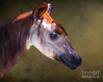 Giraffe Photograph - Okapis Deer By Darrell Hutto by J Darrell Hutto