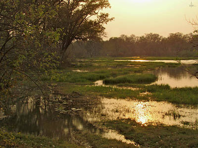 Photograph - Okavango Delta Gold by David Bader