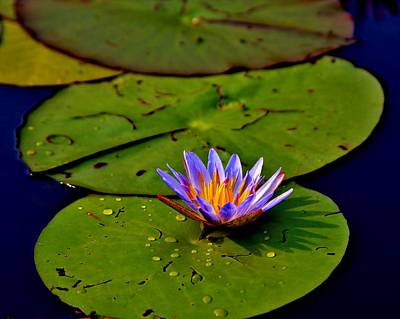 Flora Photograph - Okavango Lily Pad by Stacie Gary