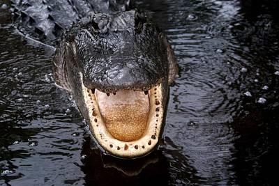 Okefenokee Alligator 1 Art Print