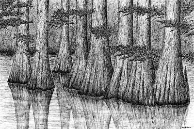 Cypress Tree Drawing - Okefenokee Cypress by Ed Einboden