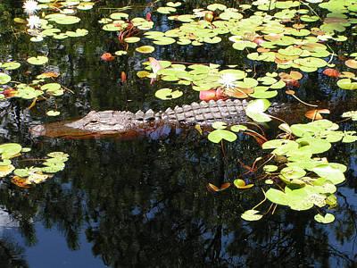 Photograph - Oki Gator - Alligator by rd Erickson