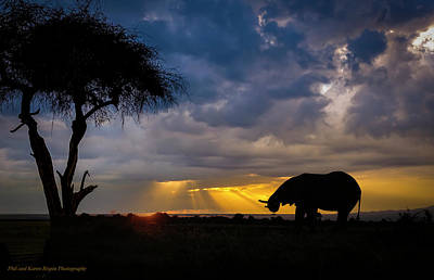 Photograph - Ol Pejeta 02 by Philip Rispin