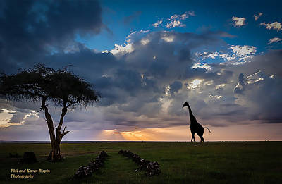 Photograph - Ol Pejeta by Philip Rispin