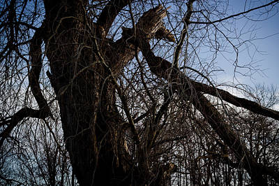 Photograph - Old And Gnarly by Alex Leonard