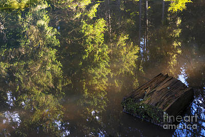 Forest Photograph - Old And New Life by Yuri Santin