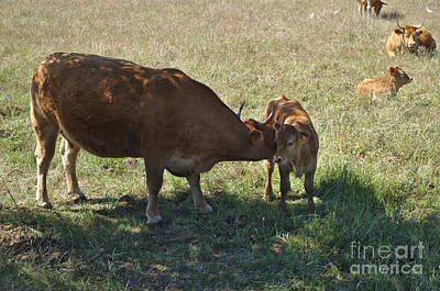 Countryside Photograph - Old And Young by Angelo DeVal