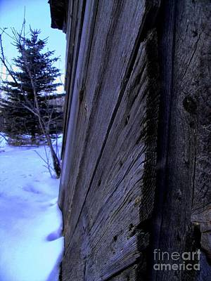 Old And Young Spruce Art Print by The Stone Age