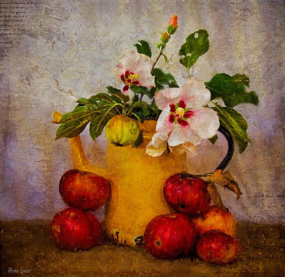 Photograph - Old Apples And Blossoms by Anna Louise