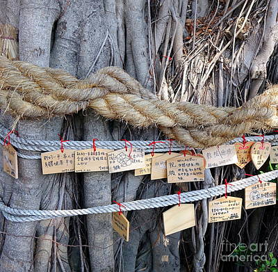 Photograph - Old Banyan Wishing Tree by Yali Shi
