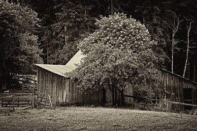 Photograph - Old Barn - 365-99 by Inge Riis McDonald