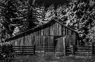 Photograph - Old Barn Coleman Valley Road Infrared Black And White by Blake Webster