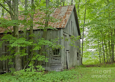 Photograph - Old Barn In Summer Woods by Alan L Graham