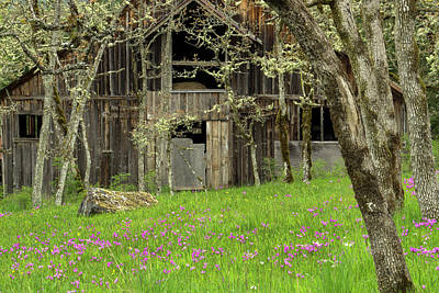 Photograph - Old Barn On Vancouver Island by Inge Riis McDonald