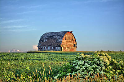 Photograph - Old Barns And Elderberries by Bonfire Photography