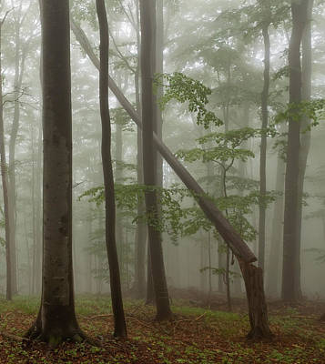 Old Beech Forest Art Print by Evgeni Dinev