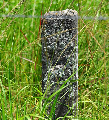 Benchmark Photograph - Old Benchmark by Amy Spear