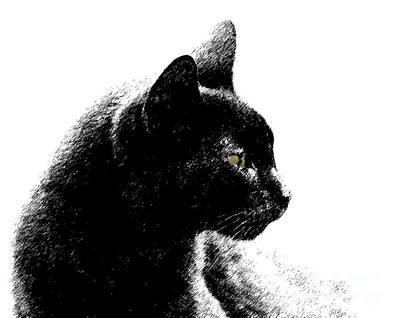Art Print featuring the photograph Old Black Cat Two by Lila Fisher-Wenzel