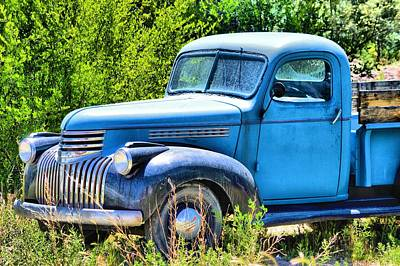 Photograph - Old Blue At Pasture by Jacqui Binford-Bell