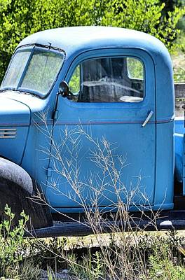 Photograph - Old Blue In The Weeds by Jacqui Binford-Bell