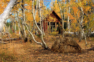 Photograph - Old Cabin In The Aspens by James Eddy
