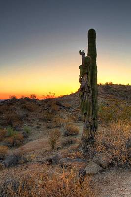 Digital Art - Old Cactus Sunrise by Dan Stone