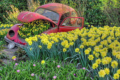 Photograph - Old Car And Daffodils by Nadia Sanowar