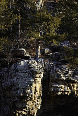 Art Print featuring the photograph Old Cedar Buffalo National River by Michael Dougherty