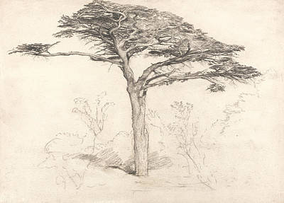Drawing - Old Cedar Tree In Botanic Garden, Chelsea by Samuel Palmer