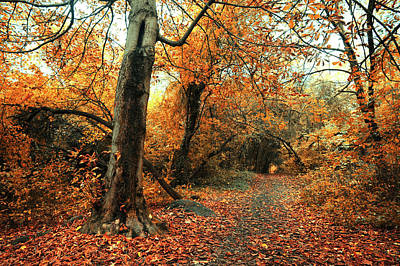 Path In Forest Photograph - Old Chestnut Tree by Jenny Rainbow