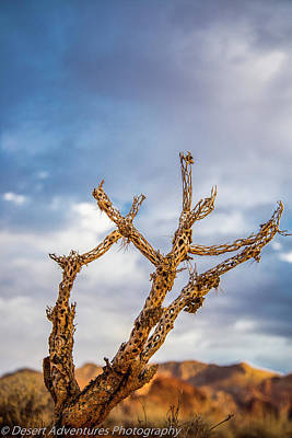 Photograph - Old Chollas Need Love Too. by James Dudrow
