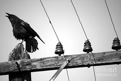 Photograph - Old Crow by Balanced Art
