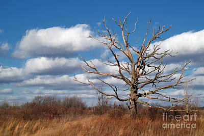 Old Dead Tree Art Print by Jeff Holbrook