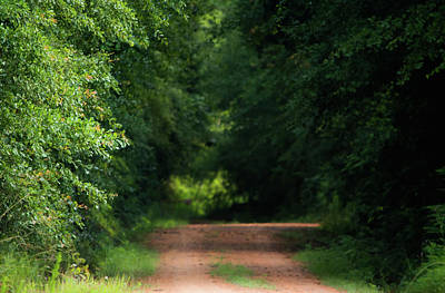 Art Print featuring the photograph Old Dirt Road by Shelby Young