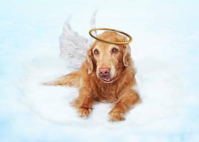 Senior Dog Photograph - Old Dog Angel On Cloud In Heaven by Susan Schmitz