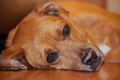Photograph - Old Dog Resting by Linda Mesibov