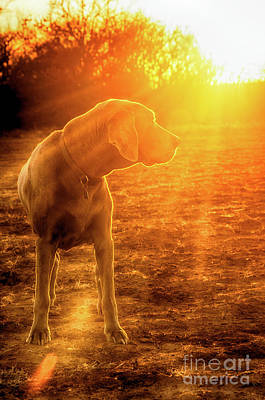 Photograph - Old Dog Sunset by Sari ONeal